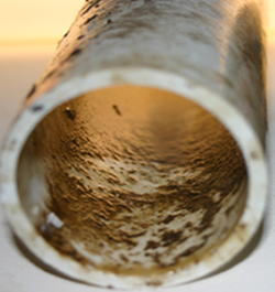 Biofilm is a slimy layer of bacteria and other microorganisms that adhere to the inside surface of waterlines. As water flows through the waterlines parts of the biofilm can break off and contaminate the water | Zamira Australia